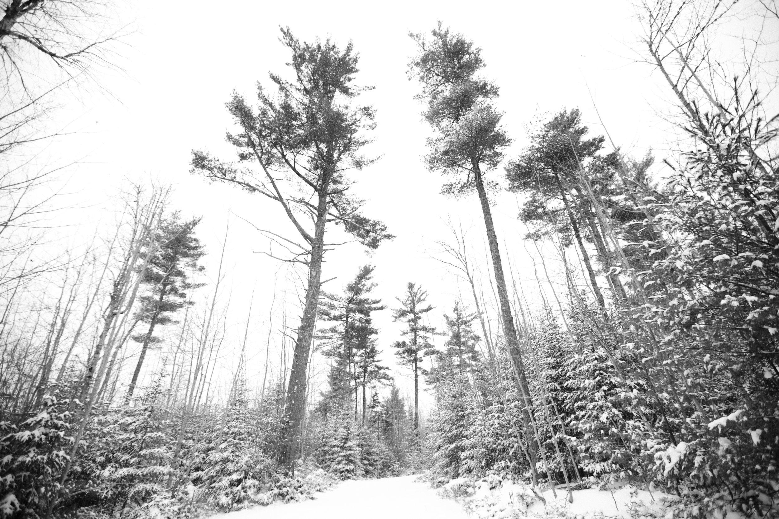 snow-23