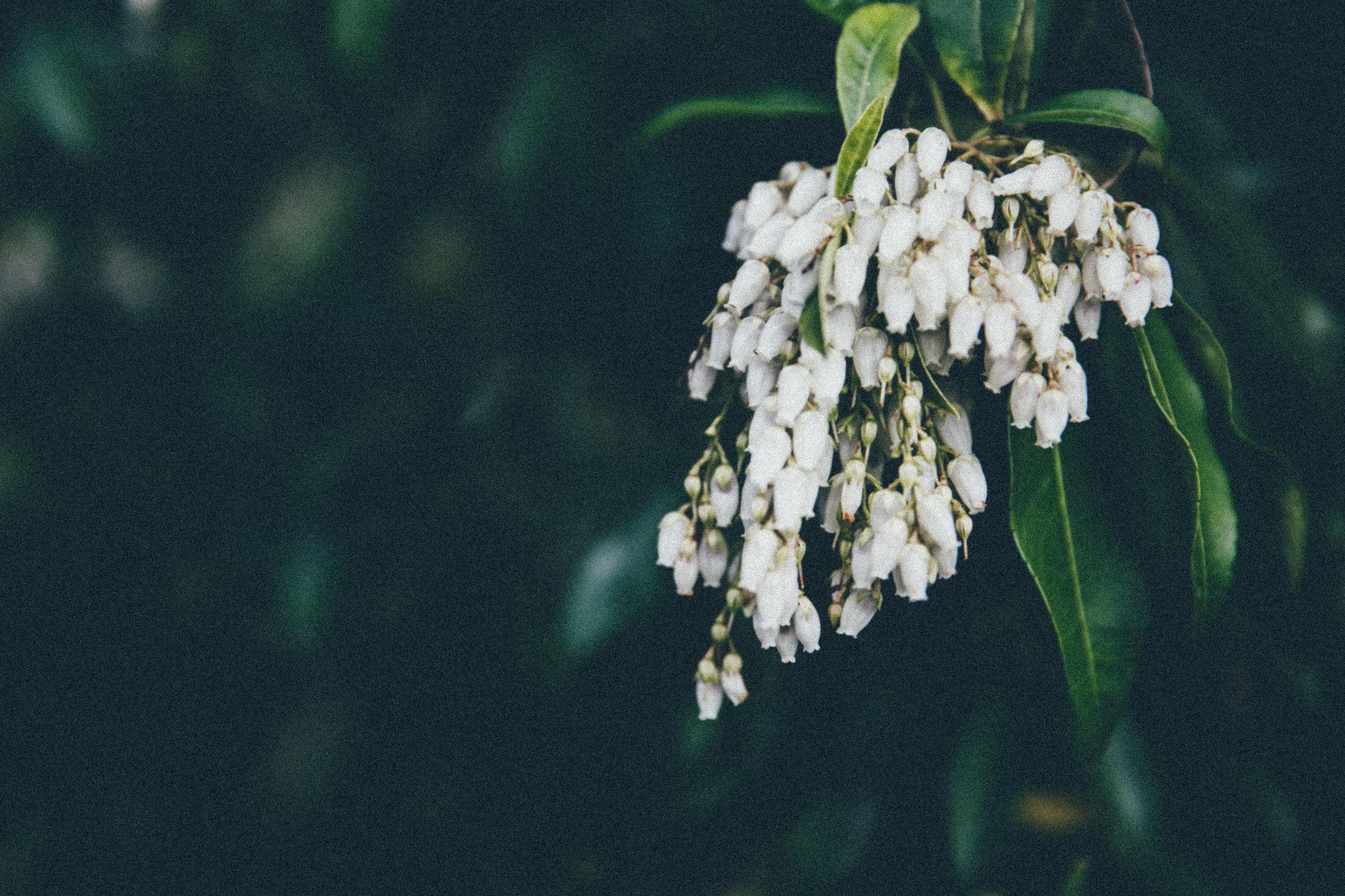 blossom-13