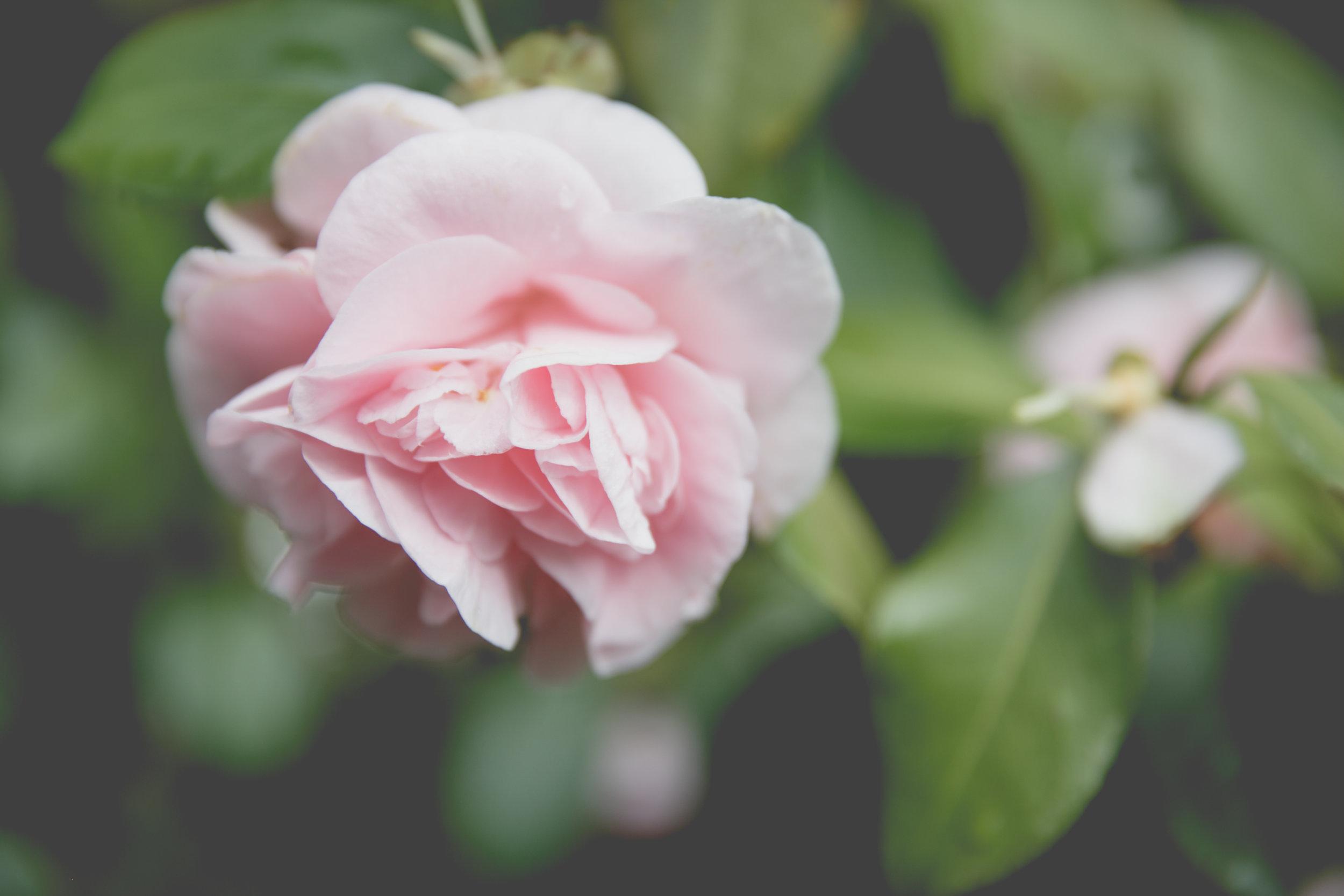 blossom-17