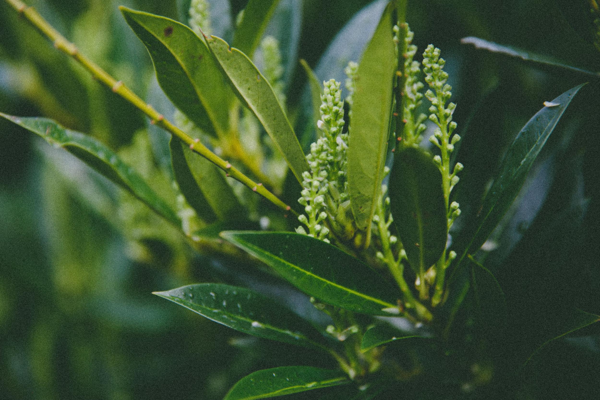 blossom-18
