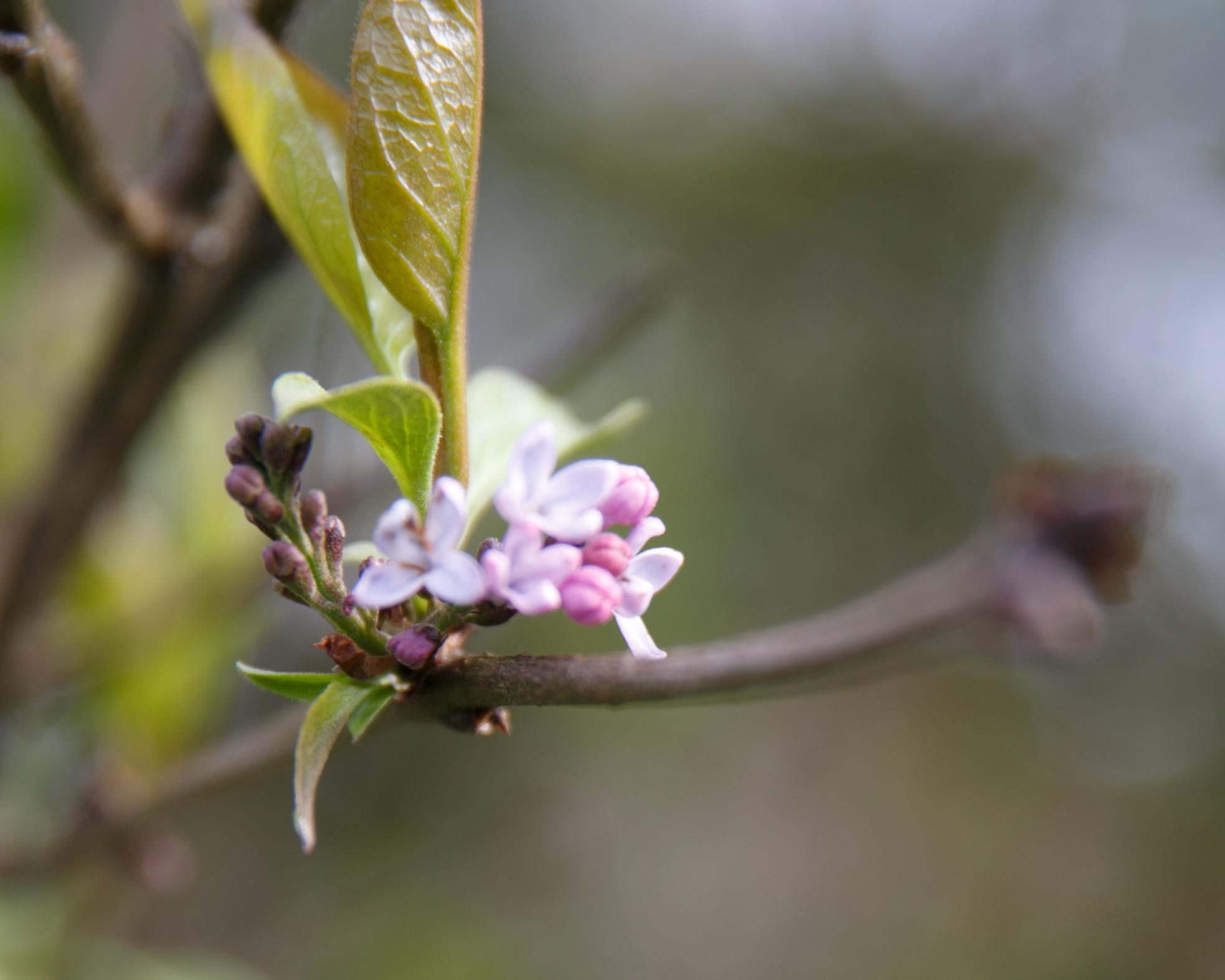 blossom-22