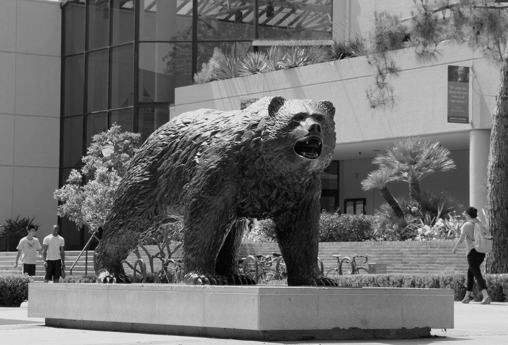 The UCLA Bruin.