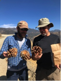 Historian Kevin Brown and Ecologist Scott Cooper marvel at our great pinecone discovery.