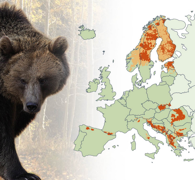 Brown bear range in Europe.