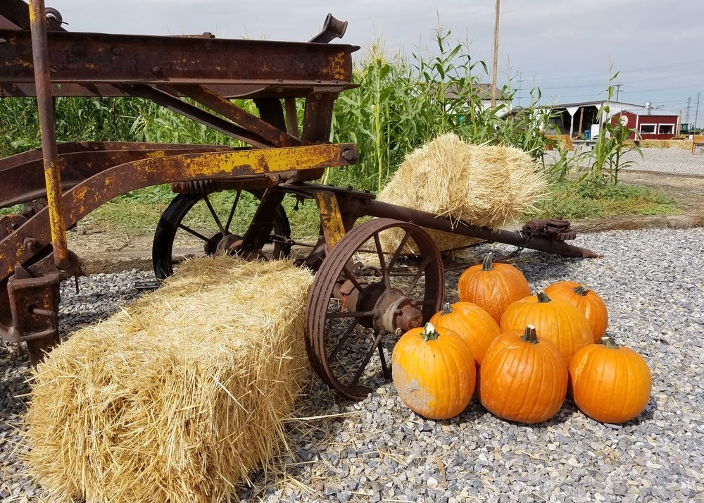 Fall Festival at Cross E Ranch