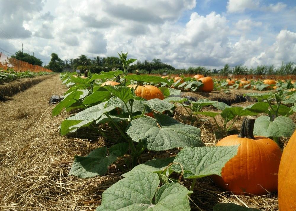 pumpkin carving date night ideas