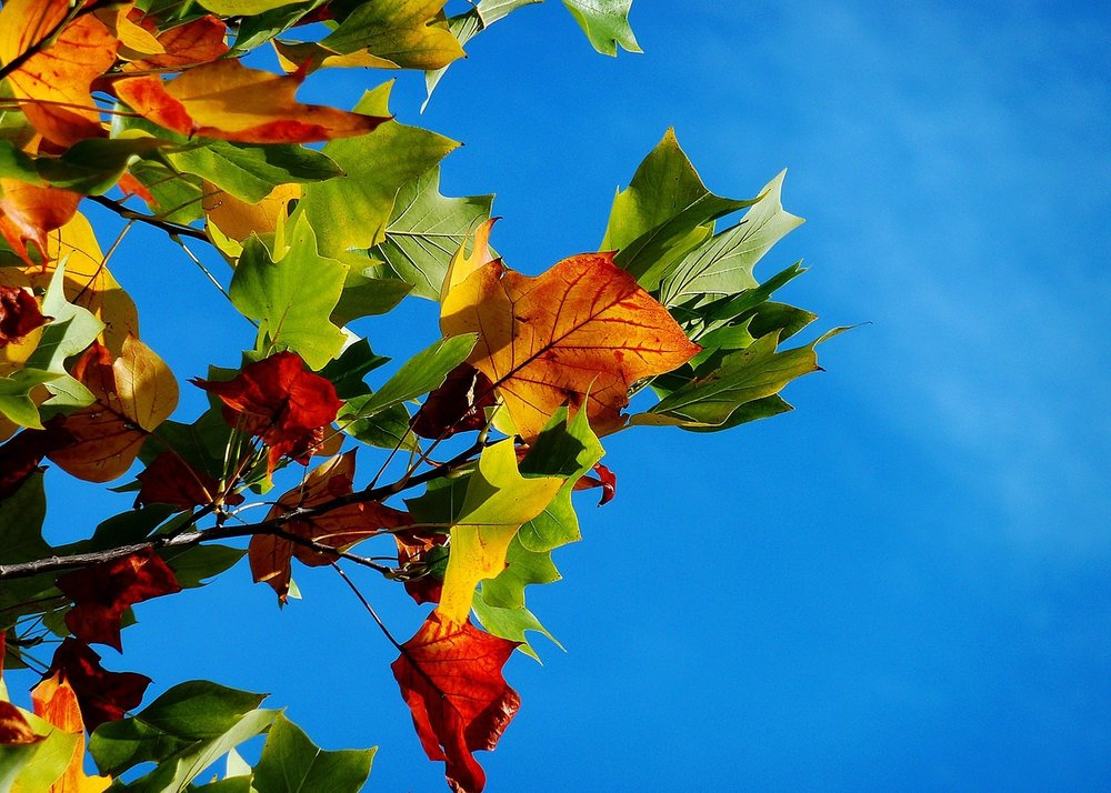 fall activities davis county