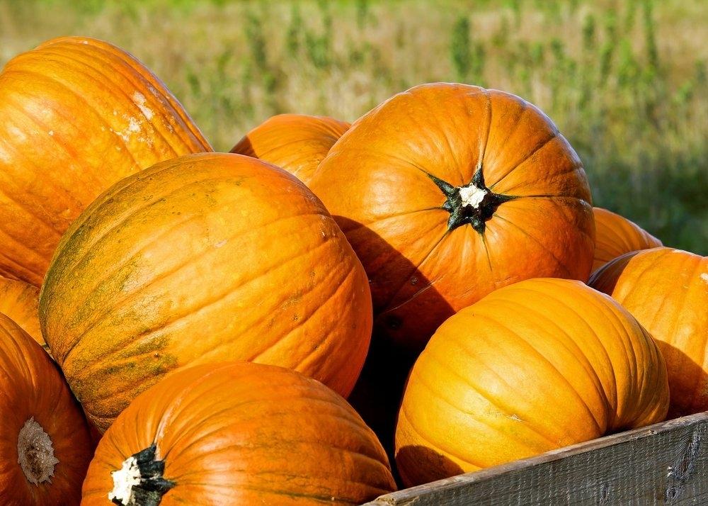 davis county pumpkin patches
