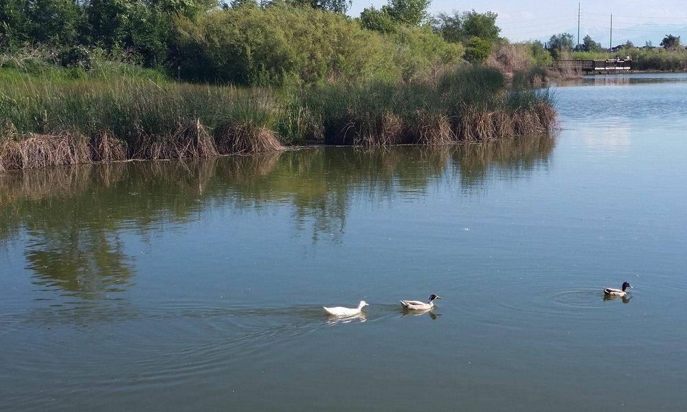USU Botanical Gardens - ducks and pond
