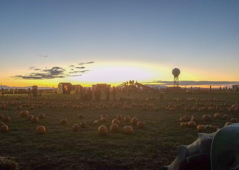 packs pumpkin patch farmington utah