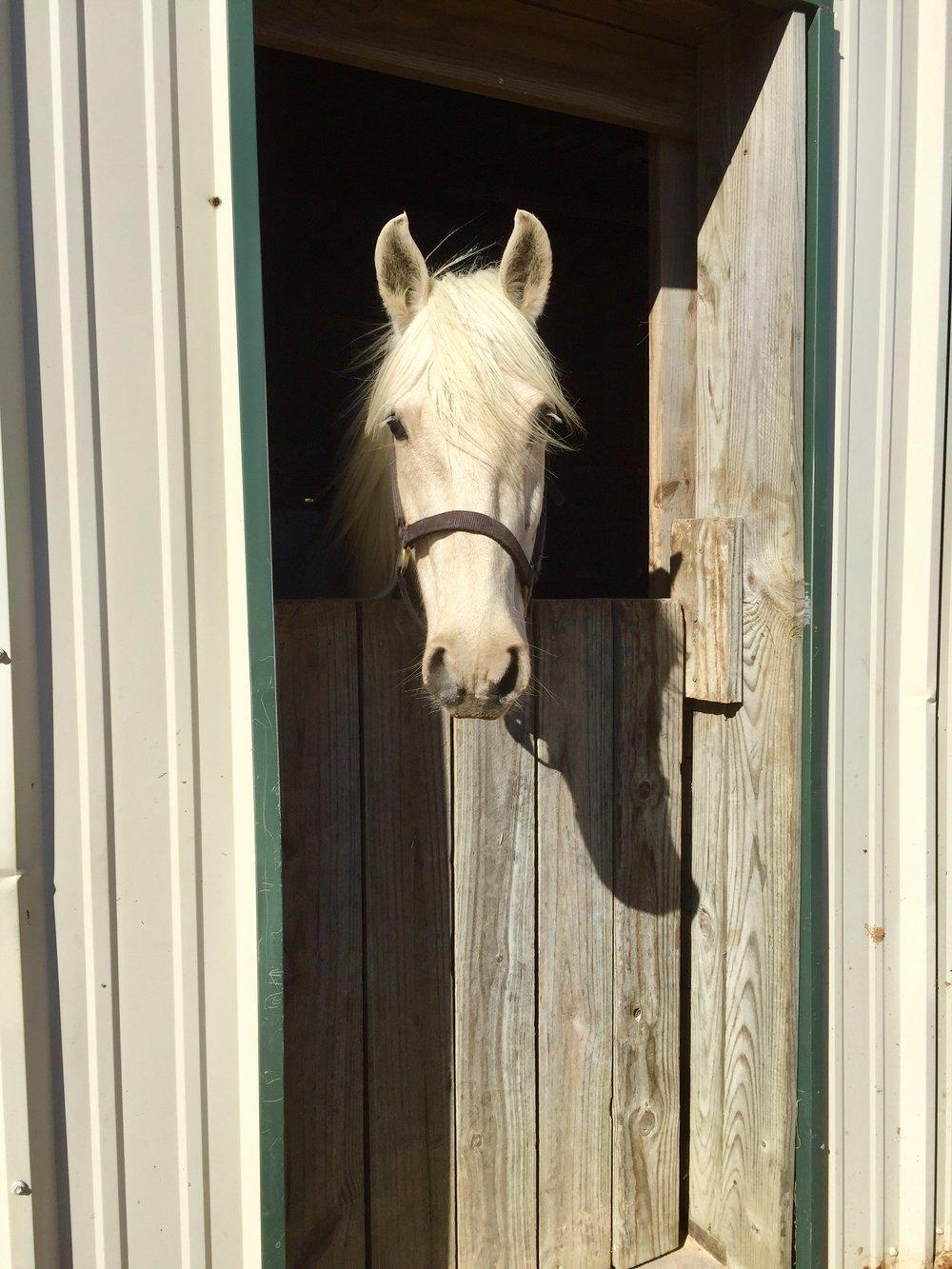 dianes horse.jpg