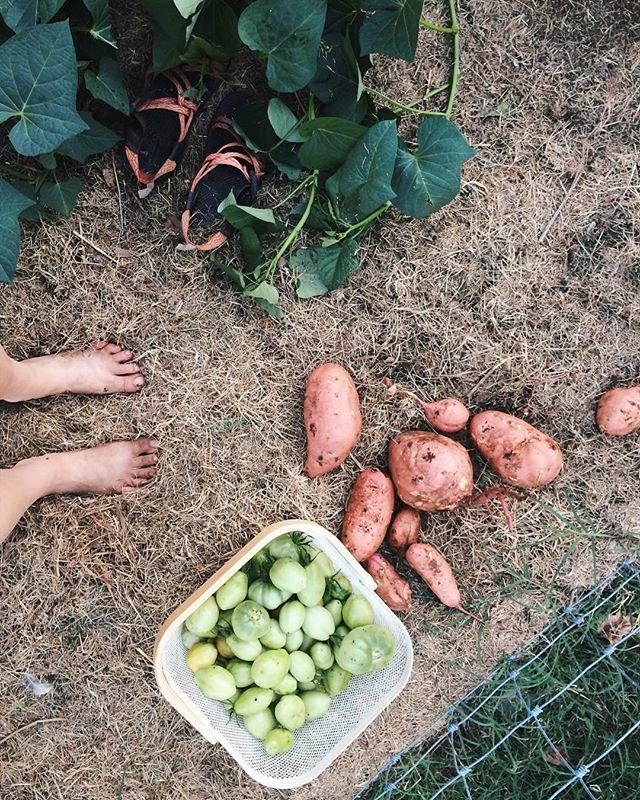 a late summer garden vignette