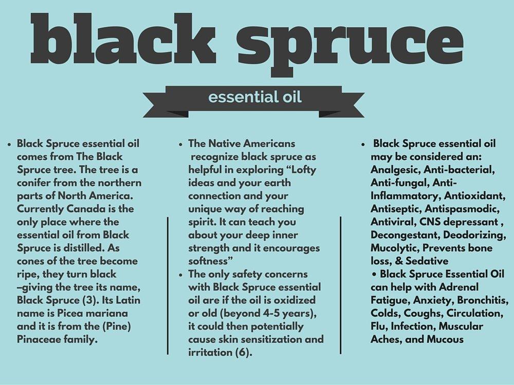 black spruce (1).jpg