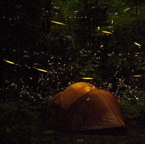 Bangalore-offbeat-experiences-fireflies-866x487.jpg