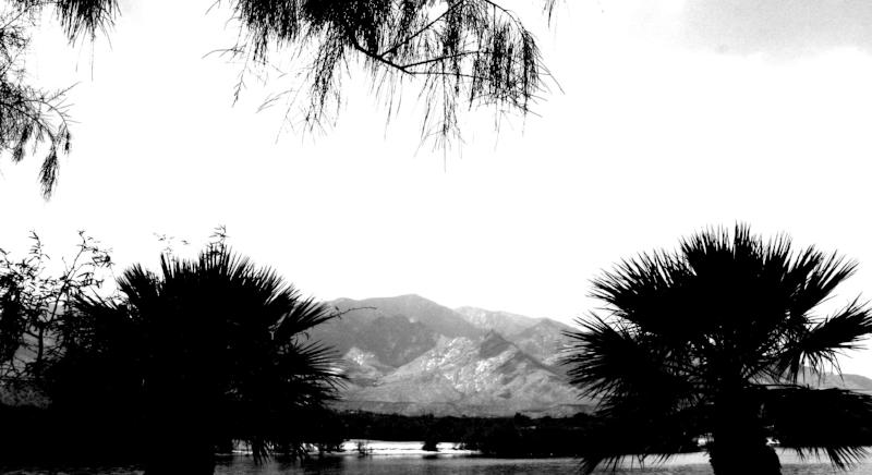 lake_roper_treesH.jpg