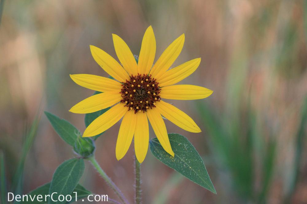 Sparkling Sunflower