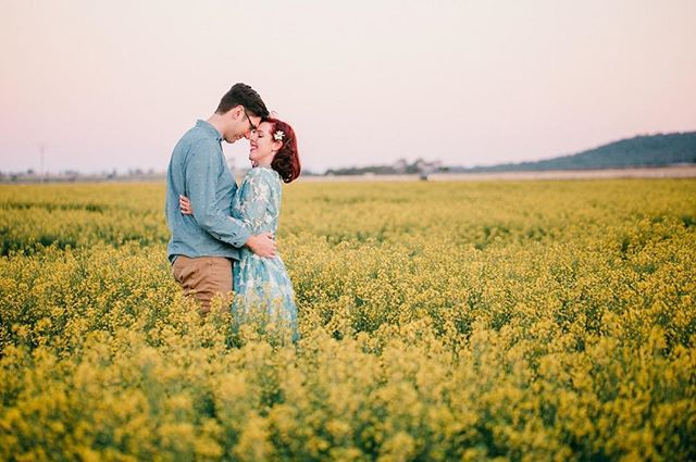 I'm lucky enough to drive past this field every other day, so I was very excited when the owner said I could use it for Saturday's session ❤️😍 Sharing a little bit of golden-field magic with you this evening.