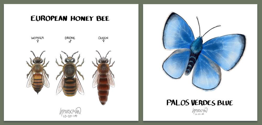 Hymenoptera and Lepidoptera