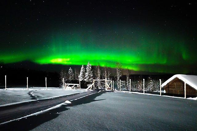 After yesterdays husky tour, the northern lights said hello to our guests✨ @mountainmadnesshusky #fantastictime #norrskenlodge . . . . . #igsweden #travelscandinavia #explorescandinavia #torneälv #instasweden #polarcircle #winterwonderland #visitlapland #swedishlapland #naturelovers #wanderlust#ourlapland #outdoorbloggers #northernlights #ig_sweden #goexplore #simplyadventure #visitsweden #photooftheday #travellapland #scandinavia #travelscandinavia #auroraborealis #aurora