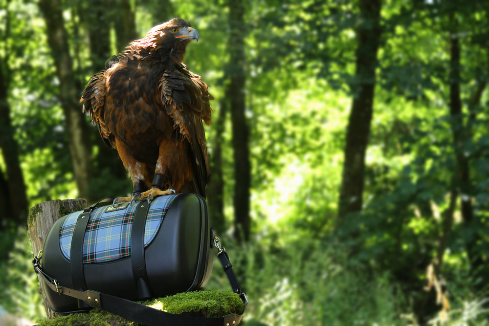 Meet Orla  - The Golden Eagle puttingPiperchief to the test