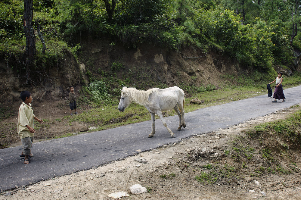 Web_Bhutan 2007_ Village children shepherd the horse home. The Western nuclear family exists in Bhutan in the form of a wider community, like a village. Many children grow up with their grandparent.jpg