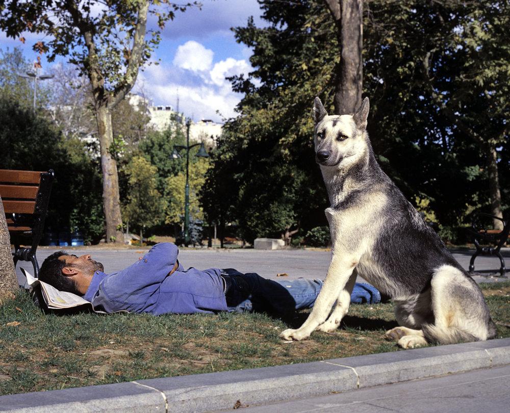 GeziPark _Istanbul_01GeziPark Gentle Resistance001Web_Dog portrait_copyright Claudia Leisinger_copyright Claudia Leisinger.jpg