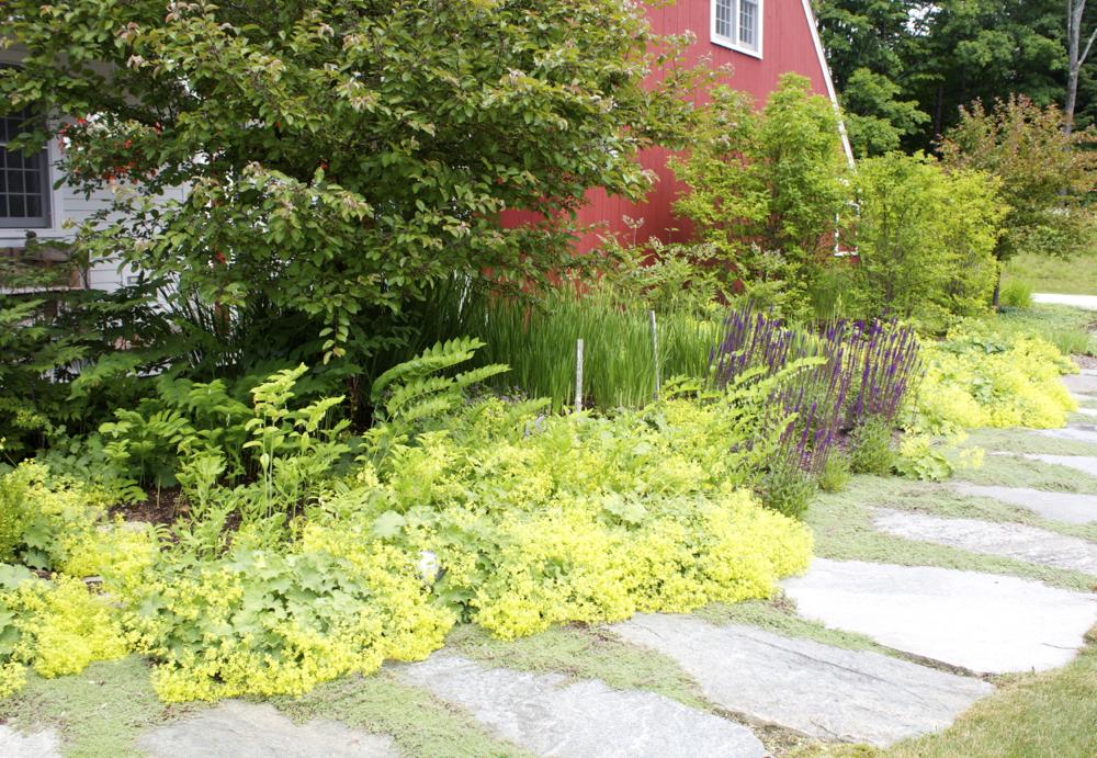 Front landscaping.jpg