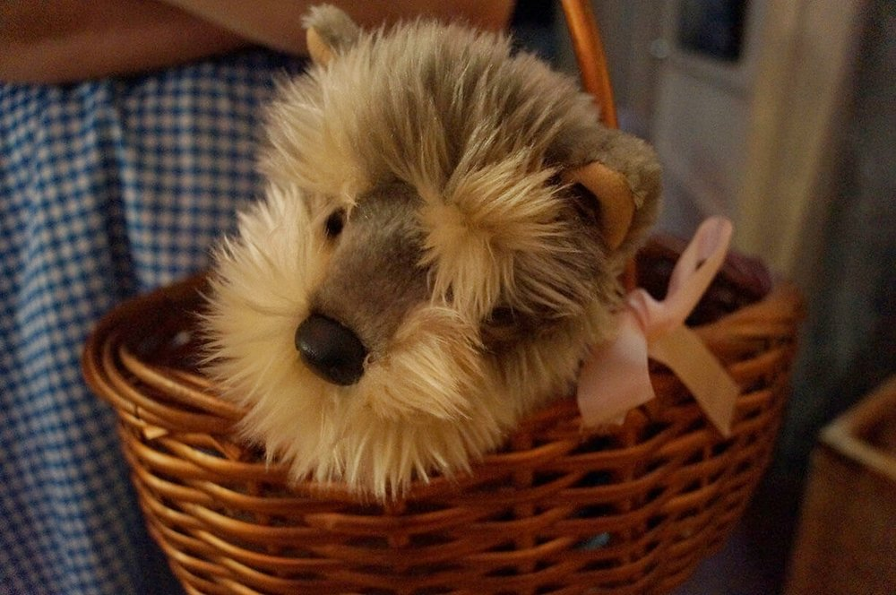 Closeup of stuffed animal version of Toto dog from Wizard of Oz in costumed entertainer's basket - Historia Wedding and Event Planning