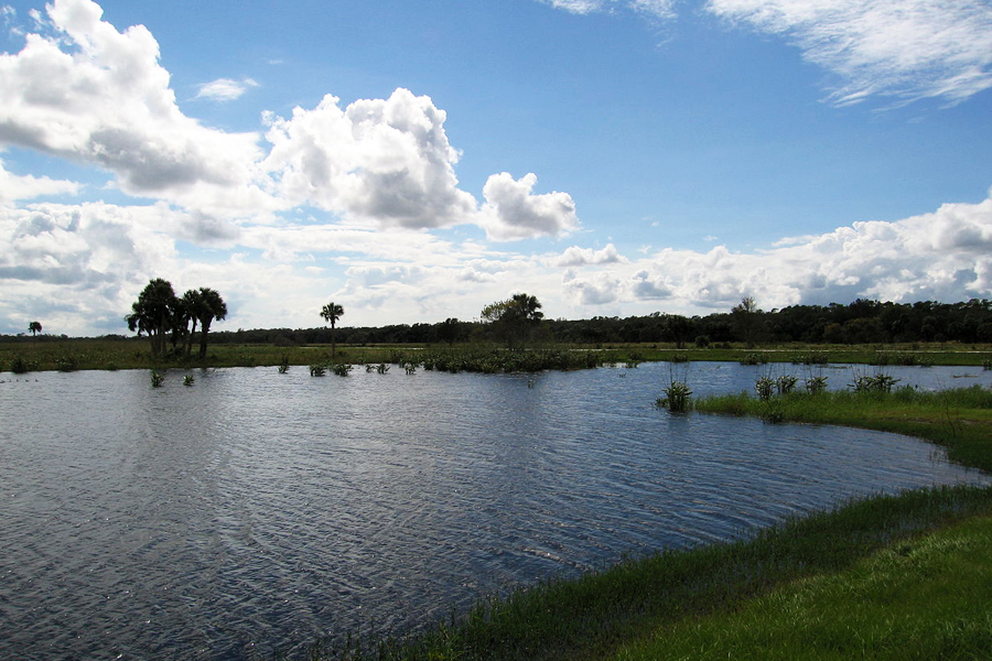 Taylor Creek Stormwater Treatment Area Trailhead - Nestled between Okeechobee County's magnificent live oak trees and other lush, native flora and fauna, the Taylor Creek Reservoir helps protect Lake Okeechobee and the surrounding coastal estuaries. It's a great place for a hike!