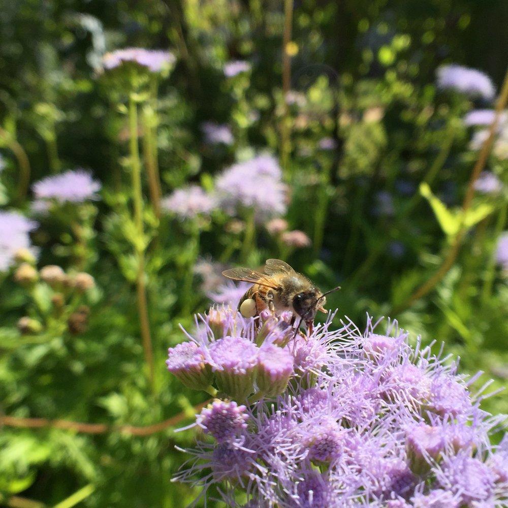 Bee on Greggsmist.jpeg