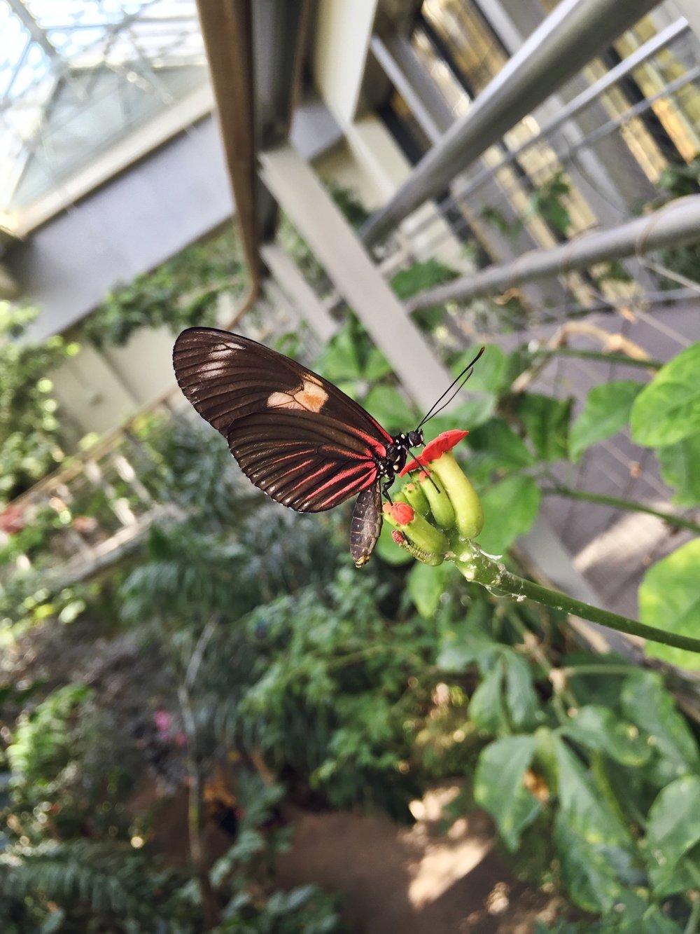 Butterfly House.jpeg