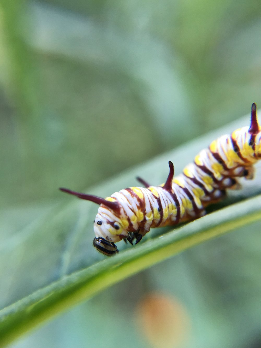 What Do You Need To Attract Butterflies To Your Garden? The First Thing  Youu0027ll Need To Think About Is Location! Most Butterfly Attracting Plants  Are ...