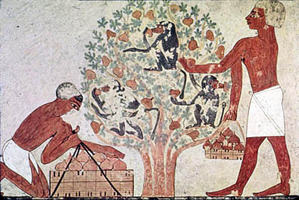 Stylized fresco from Ancient Egypt showing fig cultivation. What about the baboons? Were they helping or is something allegorical being depicted here?