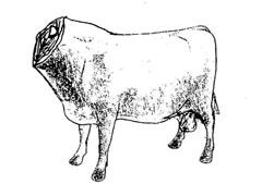 headless_bull.jpg