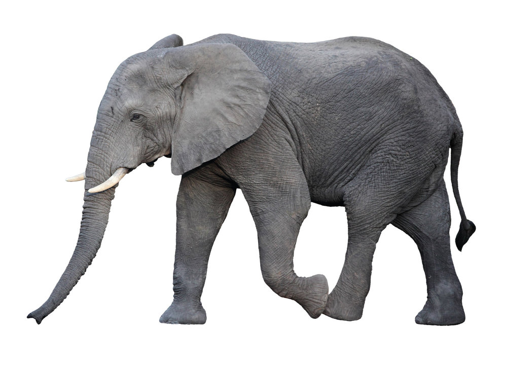 How generic was  your  elephant?