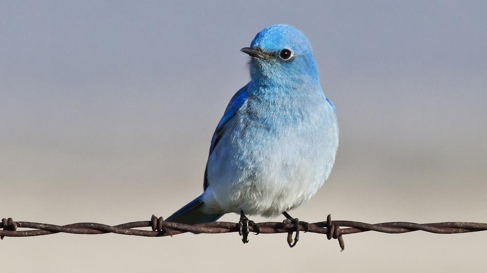 """""""Tweet!"""""""