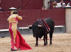 bullfight500s.jpg