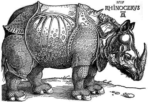 Albrecht Dürer (1515) Rhinocerous. Print from woodcut. The woodcut is not entirely a product of Dürer's imagination. It was based on a written account and brief sketch of a single specimen brought to Lisbon. It was thought to be a unicorn at first. The King of Portugal eventually offered it to the Pope as a gift.