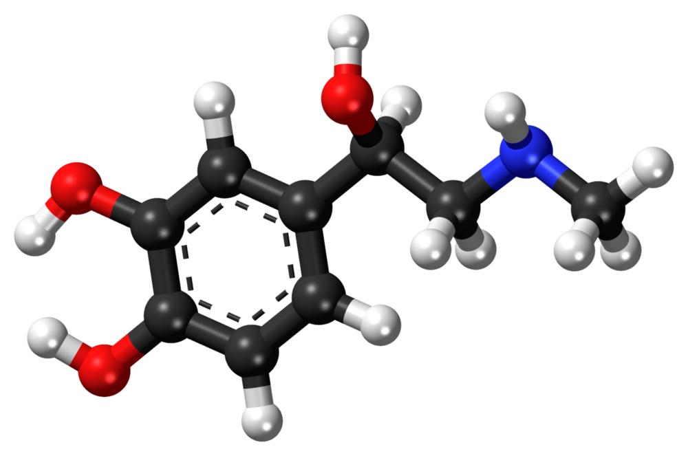 """Ball and stick"" model/map of the adrenalin molecule. Rest (somewhat) assured that this elegant arrangement, of 9 carbon atoms, 3 oxygen atoms, 13 hydrogen atoms and a single nitrogen atom, will optimize your survival in what poet Alfred Lord Tennyson referred to as ""Nature, red in tooth and claw."""