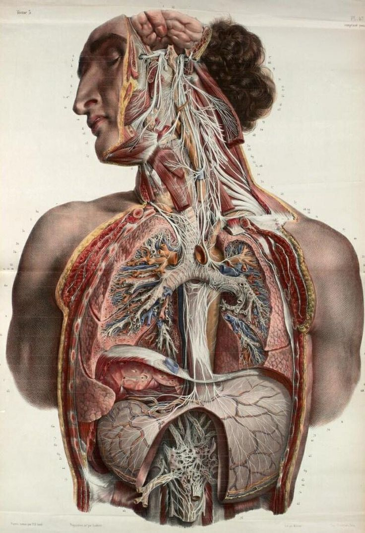 cf2a3fb0e1c0d9419a1ad0cedffea366--anatomy-illustration-medical-illustration.jpg
