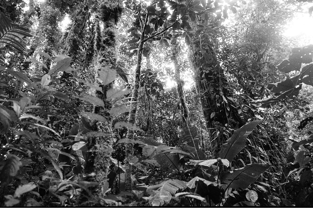 Costa Rica, 2009
