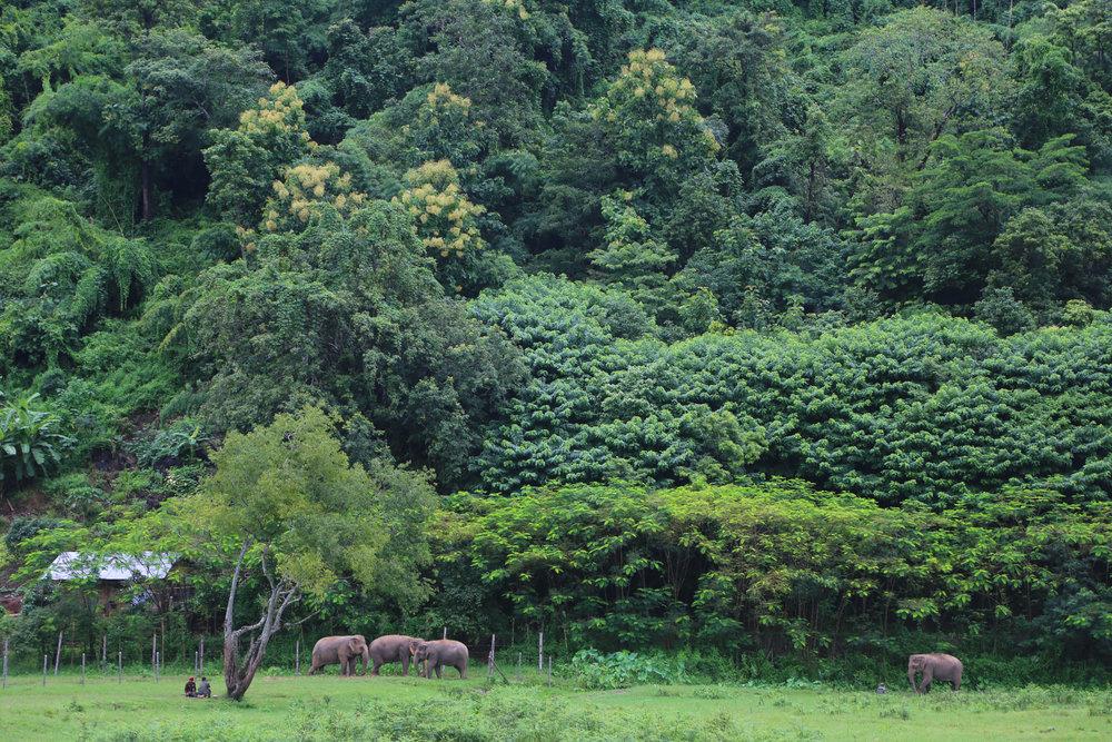 Elephant Nature Park, Thailand, 2014