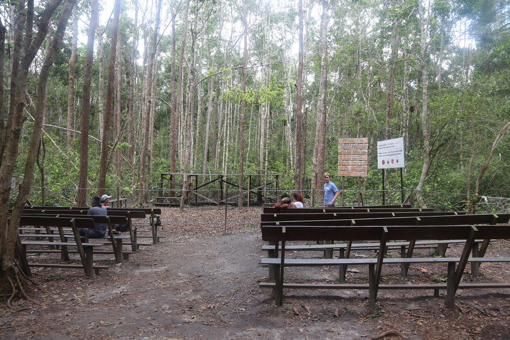 Viewing area and feeding platform at Camp Leakey before many others arrived.