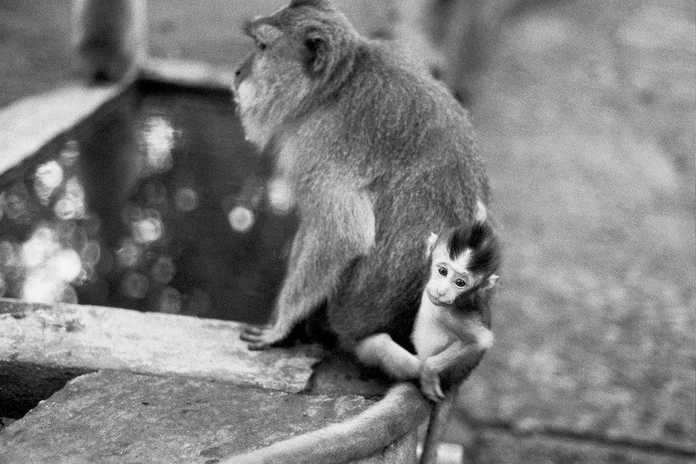 Sacred Monkey Forest, Ubud, Bali, 2017