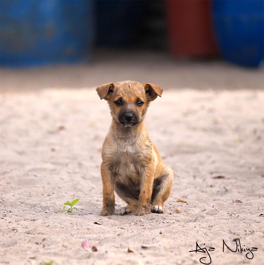 Puppy_final.jpg