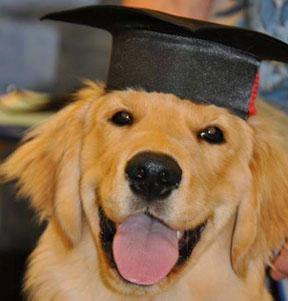 09/15/2009 Conor graduated intermediate obediance classes Magna Cum Hound. 06/15/2009: Conor graduated puppy kindergarten, Suma Cum-Canine!