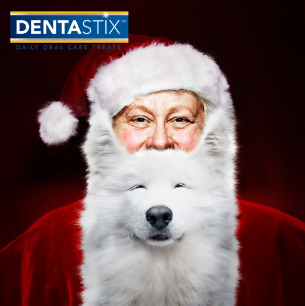 DENTA_Holiday.jpg