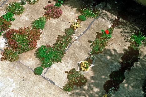 Sidewalk Crack Gardens