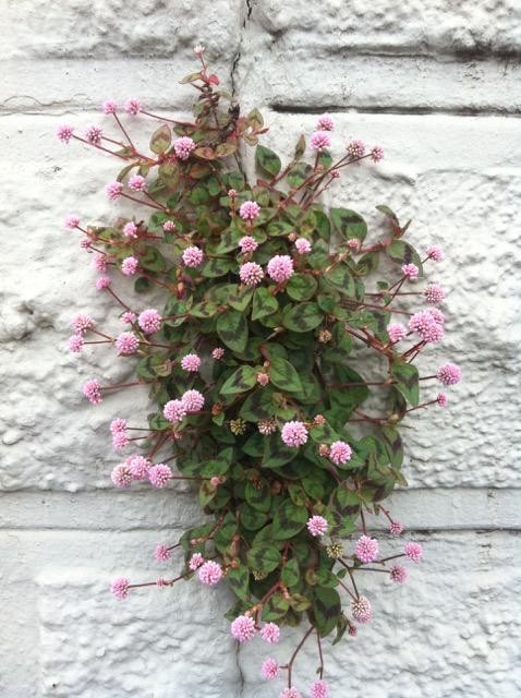 Resilient Plants