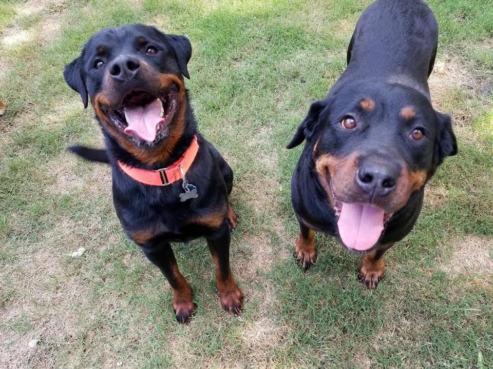 Memphis Rottweiler Rescue Inc